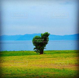 緑の写真・画像素材[1420873]