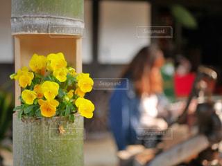 花の写真・画像素材[1419033]