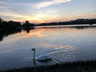 公園,秋,夕日,綺麗,散歩,水面,白鳥,秋空,千波湖