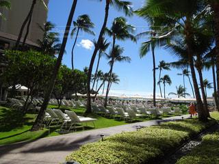 風景,海,空,建物,海外,ビーチ,雲,青空,観光,椅子,旅行,チェア,ヤシの木,ホテル,ハワイ,リゾート,海外旅行