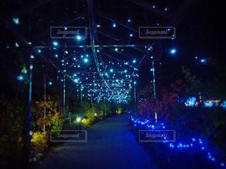 光の道の写真・画像素材[1680800]