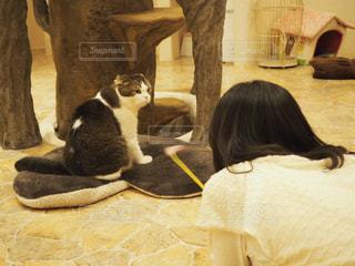 猫,屋内,後ろ姿,女の子,ねこ,クッション,背中,人,のんびり,まったり,猫カフェ,見つめ合う