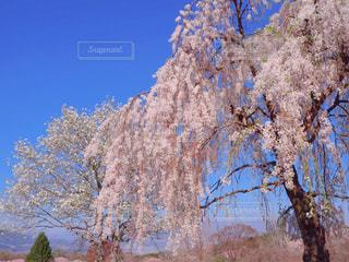 桜咲く季節の写真・画像素材[3041425]