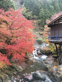 自然,秋,紅葉,森林,景色,清流,秩父