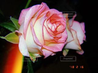 花,ピンク,バラ,家,薔薇,桃色
