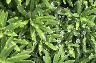 雨,植物,水,水滴,蜘蛛の巣,梅雨,天気,雨の日