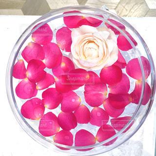 ピンク,バラ,フローティングフラワー