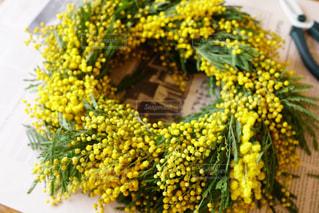 春,黄色,ふわふわ,リース,手作り,モコモコ,生花,ミモザリース