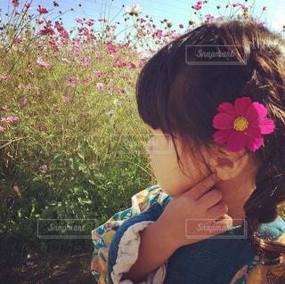 コスモス畑と女の子の写真・画像素材[1454574]