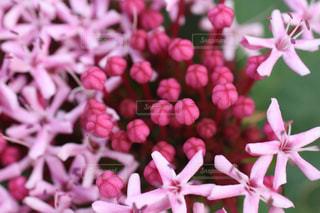 花,秋,屋外,ピンク