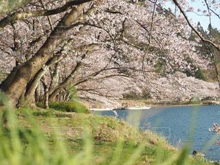 春のひと時の写真・画像素材[2060159]