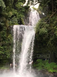 慈恩の滝の写真・画像素材[1448554]