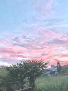 空,屋外,樹木,桃色,草木,フォトジェニック,薄ピンク,インスタ映え