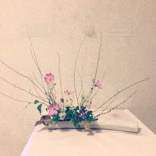花,秋,ピンク,コスモス,いけばな,華道
