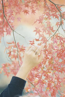 秋を感じる。の写真・画像素材[2823609]