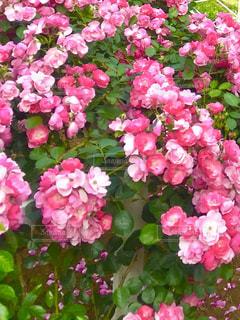 近くの花のアップの写真・画像素材[1791268]