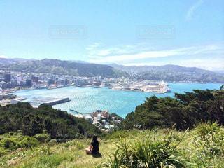 海をみおろす丘の写真・画像素材[1431274]