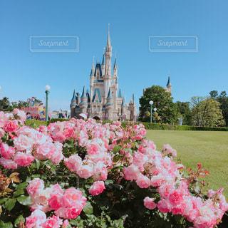 空,花,ピンク,綺麗,バラ,お城,ディズニーランド,デート,シンデレラ城,素敵,桃色,pink