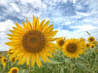 お花畑の写真・画像素材[1431245]