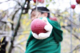 秋,赤,りんご,林檎,秋の味覚,リンゴ,果樹,りんご狩り,りんごの木