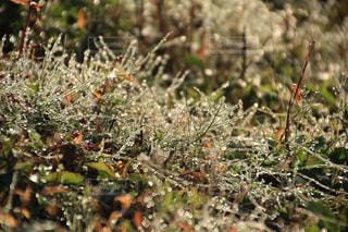 緑,植物,水滴,葉,光,雑草,キラキラ,雫,玉ボケ,朝露,草木
