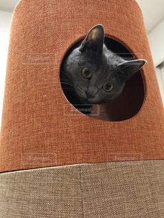 猫,キャットタワー,びっくり,ひょっこりはん