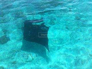 水の下を泳ぐ魚の写真・画像素材[2371229]