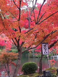 風景,秋,紅葉,京都,景色,ぜんざい,思い出,京都府,カエデ,モミジ,永観堂,紅葉の時期