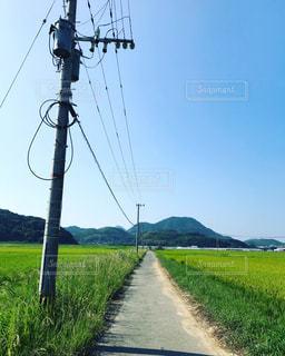 自然,風景,空,秋,青空,晴天,田舎,田んぼ,電信柱,農道,秋空