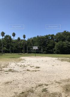 空,公園,スポーツ,芝生,屋外,青空,晴天,草,樹木,ヤシの木,福岡,パーム,バスケットゴール,ポツンと,小戸公園