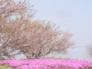 ピンクだらけ♡の写真・画像素材[1434431]