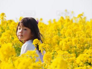 お花畑,屋外,黄色,菜の花,女の子,菜の花畑,黄,愛知県,yellow,5才