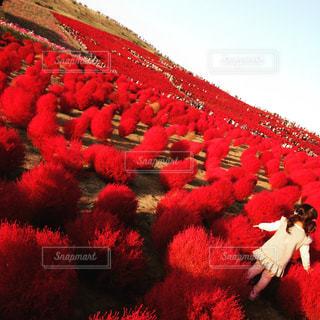 秋,紅葉,赤,コキア,秋空