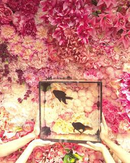 カラフル,綺麗,キラキラ,金魚,華やか,物語,ピンク系,不思議な世界,和の世界