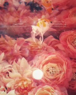 カラフル,綺麗,オシャレ,キラキラ,金魚,華やか,ピンク系,不思議な世界,和の世界