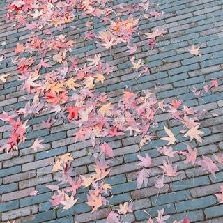 落ち葉の写真・画像素材[1652673]
