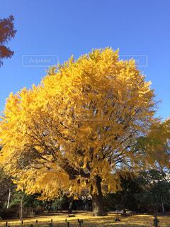 自然,空,秋,紅葉,屋外,秋空
