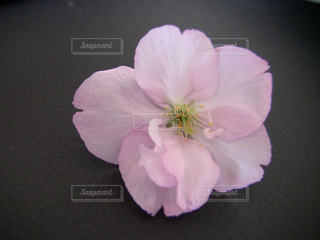 紫の花で満ちている白い花瓶の写真・画像素材[1436940]