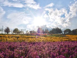 花,光芒,岐阜,牧歌の里