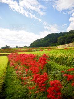 風景,空,花,秋,赤,彼岸花,奈良,秋空