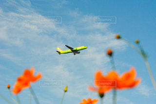 風景,空,花,秋,雲,飛行機,空港,成田空港,秋空