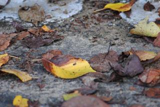 風景,秋,紅葉,落ち葉,秋空