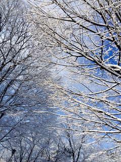 空,木,雪,白,青,枝,ホワイト