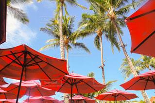 ヤシの木の横にある赤い傘の写真・画像素材[1537618]