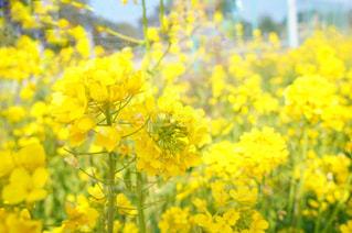 黄色の花の写真・画像素材[1830611]