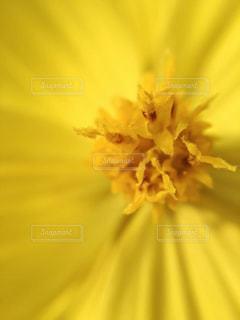 近くの花のアップの写真・画像素材[1833439]