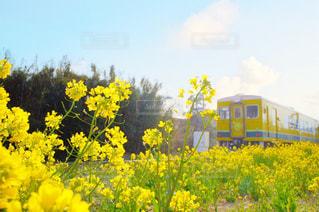 黄色の花の写真・画像素材[1841492]