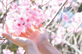 花を持っている手の写真・画像素材[1869228]