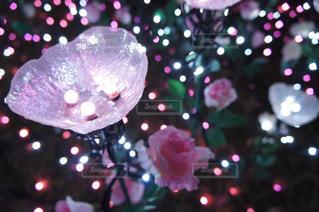 近くの花のアップの写真・画像素材[1876636]