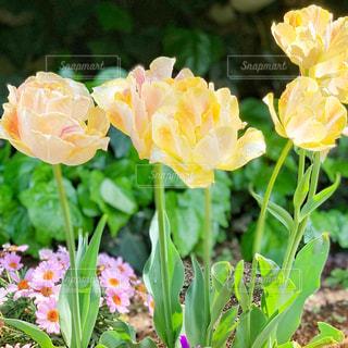 花,春,屋外,水,水滴,景色,チューリップ,鮮やか,草,雨上がり,草木